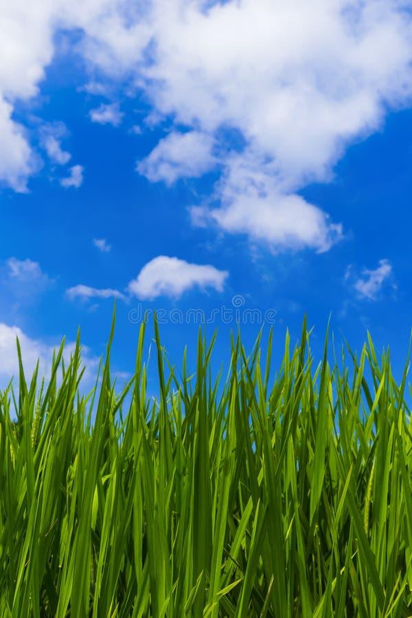 Grama e céu nebuloso fotografia de stock