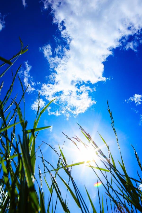 A grama e o céu azul e o sol fotos de stock