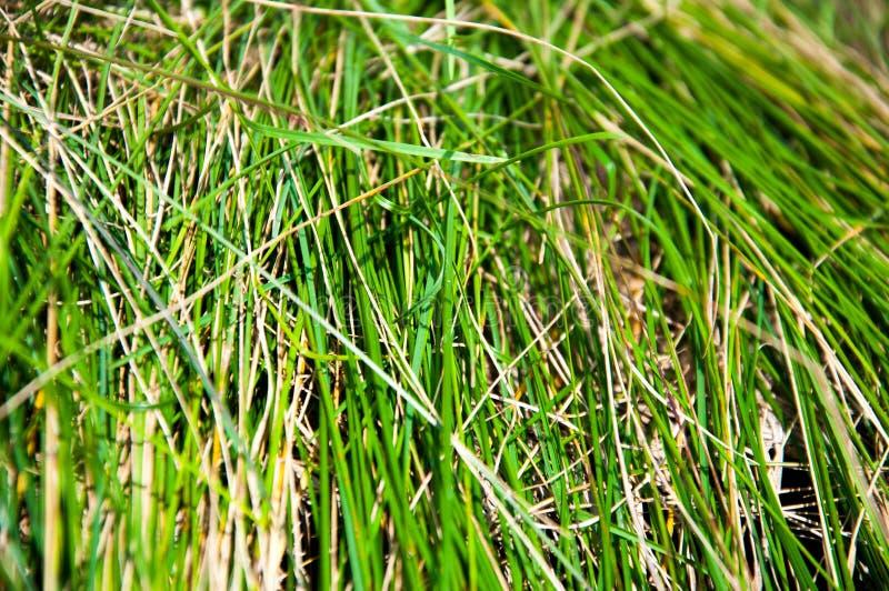 A grama fina verde cresceu em pedras Cerca de pedra foto de stock royalty free