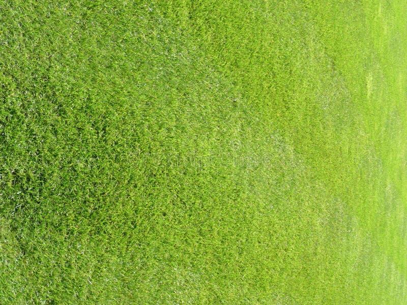Grama fresca 6 do gramado do corte