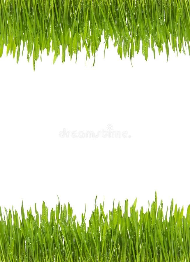 A grama fresca verde isolada com água deixa cair no fundo branco - da parte superior e da parte inferior foto de stock