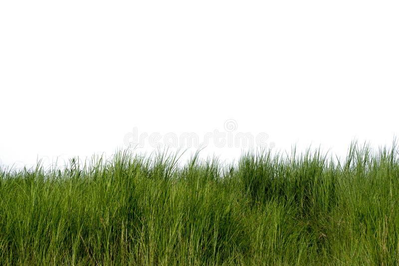 Grama fresca verde naturalmente no fundo branco isolado fotos de stock