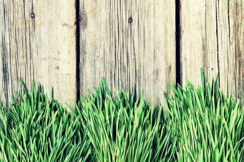 Grama, fundo, verde, natureza, cópia, de madeira, placa, planta, pl fotos de stock royalty free