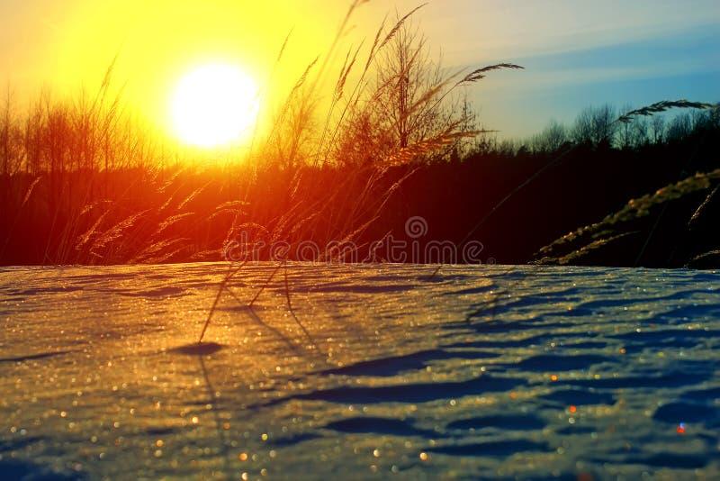 Grama gelado no por do sol do inverno Fundo do inverno imagens de stock