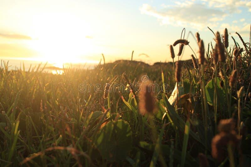 Grama litoral no por do sol fotografia de stock
