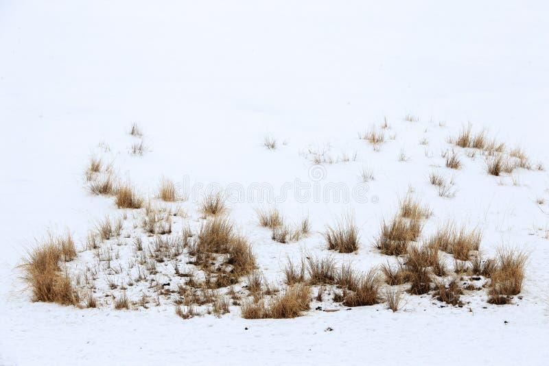 Download Grama na neve em dezembro imagem de stock. Imagem de terra - 65580427