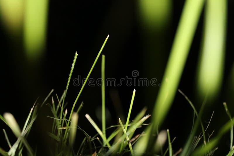 Grama na noite plantas nave Natureza surpreendente imagens de stock royalty free