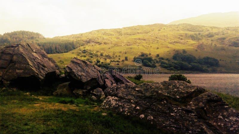 Grama, natureza em um parque em Gales foto de stock