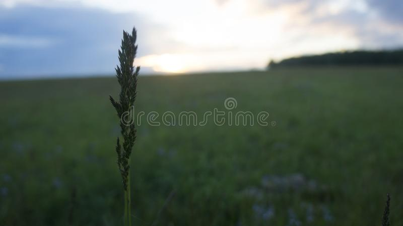 Grama no campo fotos de stock royalty free