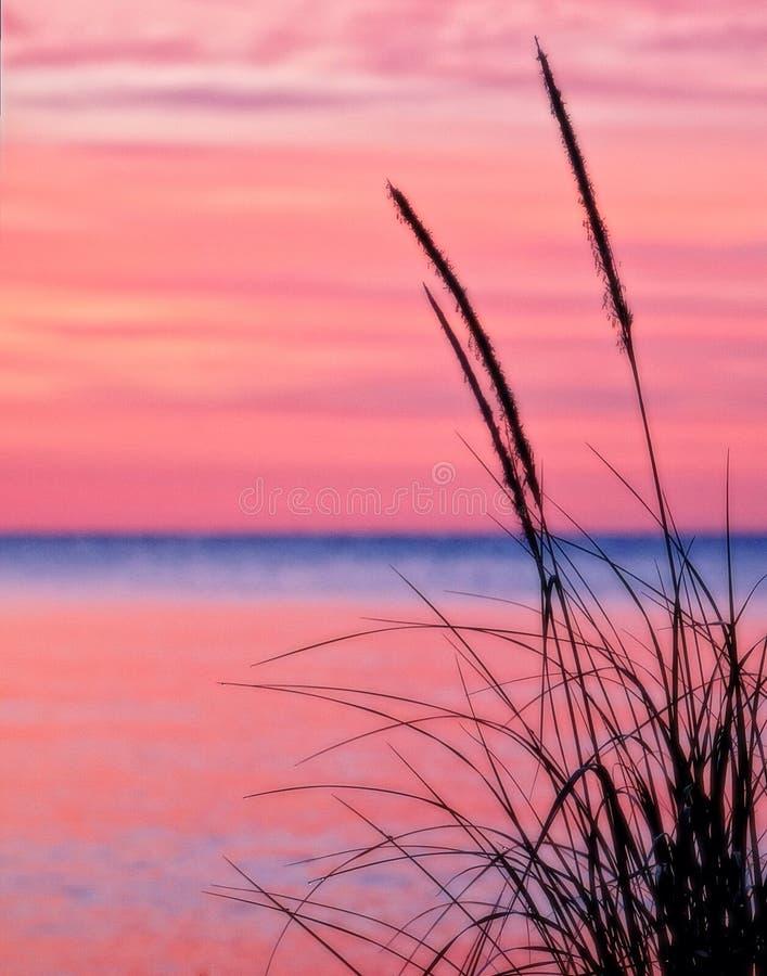 Grama no Lago Michigan fotografia de stock