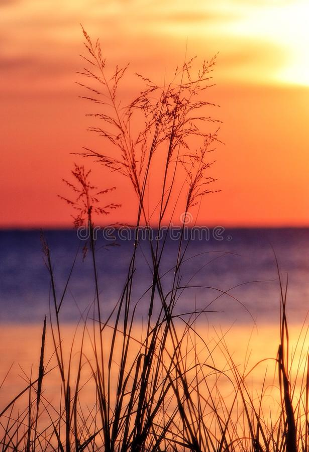 Grama no Lago Michigan fotos de stock