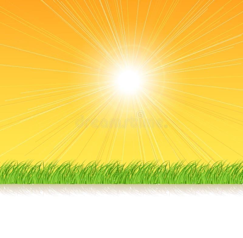 Grama nos raios da luz do sol