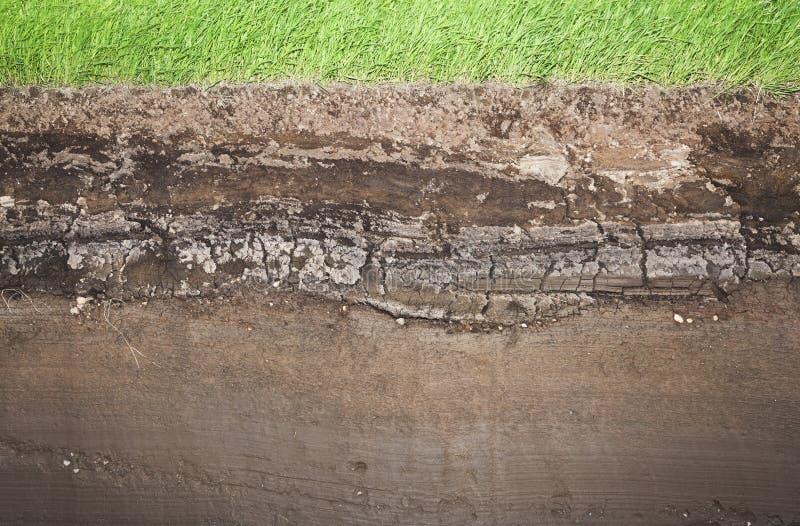 Grama real e diversas camadas subterrâneas do solo imagem de stock