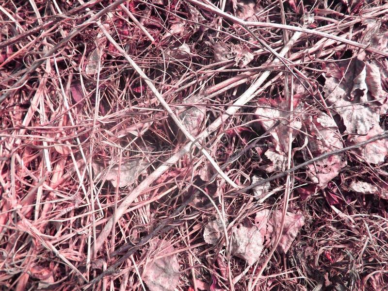 A grama seca desvaneceu-se fotografia de stock
