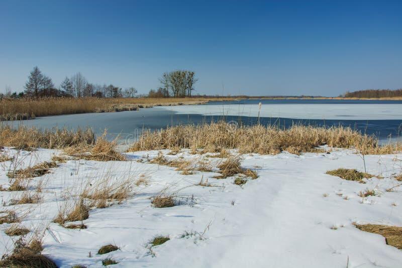 Grama seca e neve na borda de um lago congelado Árvores no horizonte e no céu azul imagem de stock