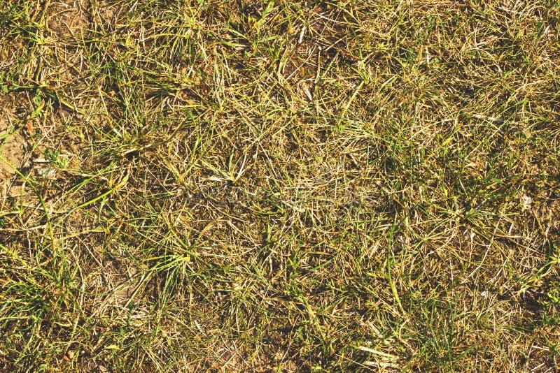 A grama seca, feno, palha textured o fundo da beira fotos de stock