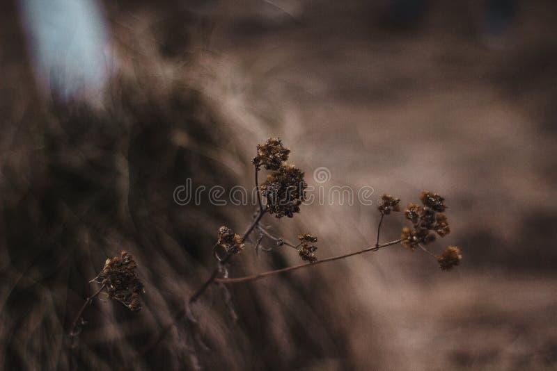 grama seca perto do vison foto de stock