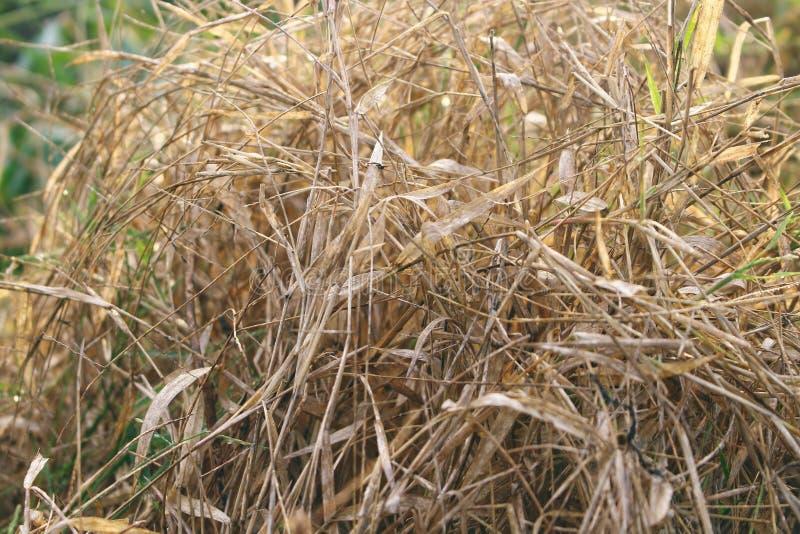 A grama secada seja inflamada facilmente foto de stock royalty free