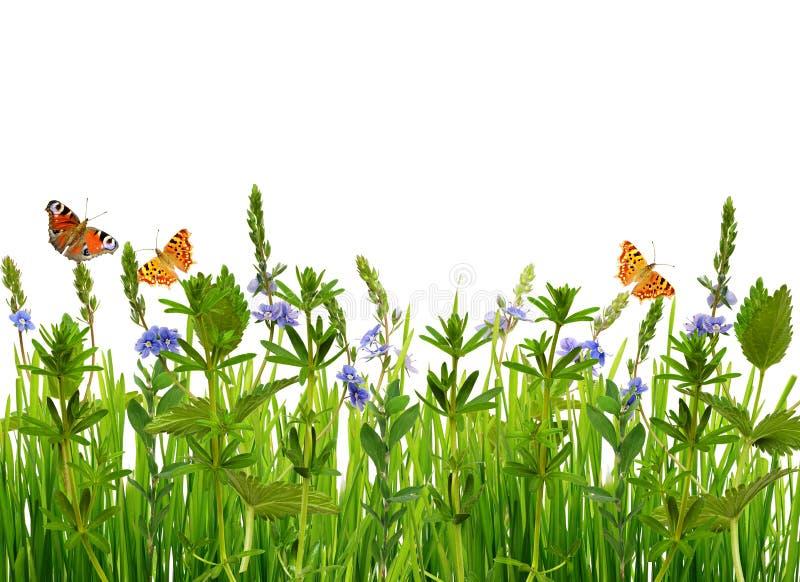 Grama selvagem, flores e borboletas foto de stock royalty free