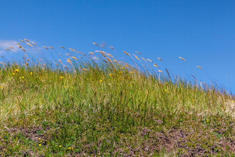 Grama selvagem no vento Harris, ilhas ocidentais, Escócia fotografia de stock