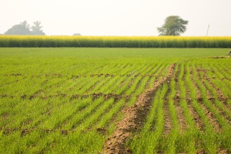 Download A grama verde foto de stock. Imagem de verde, prado, planície - 12805180