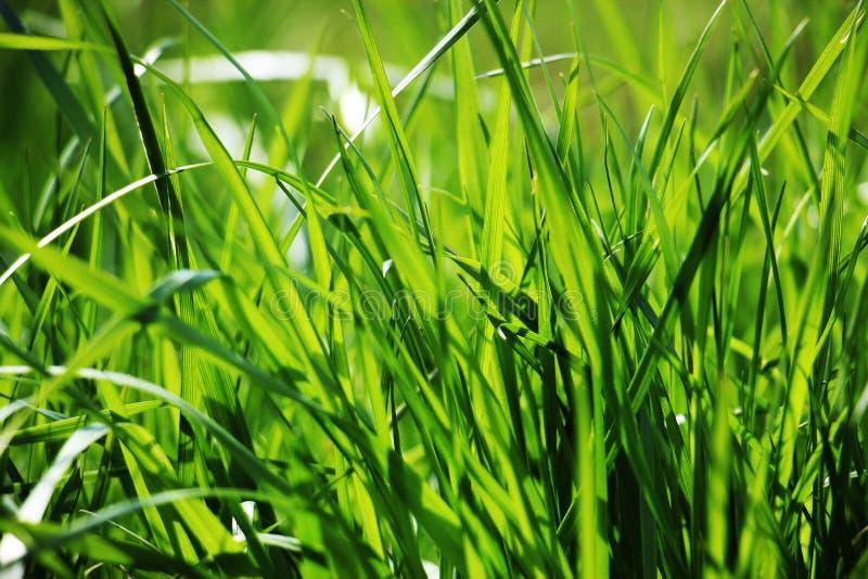 A grama verde imagens de stock royalty free