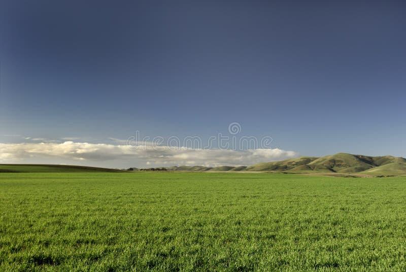 Grama verde & céu azul foto de stock