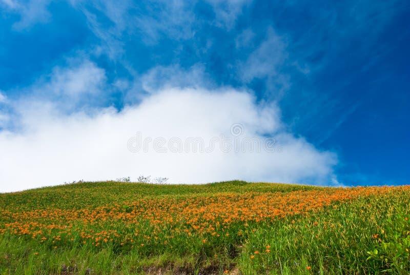 grama verde bonita e flores amarelas fotografia de stock royalty free