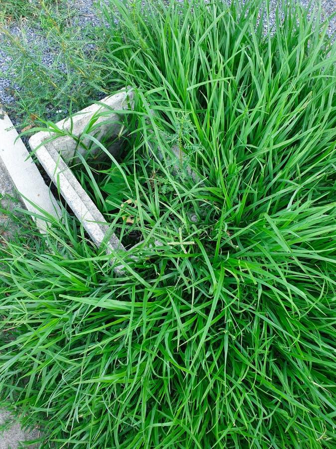 Grama verde coberto de vegetação que cobre blocos de cimento fotos de stock royalty free