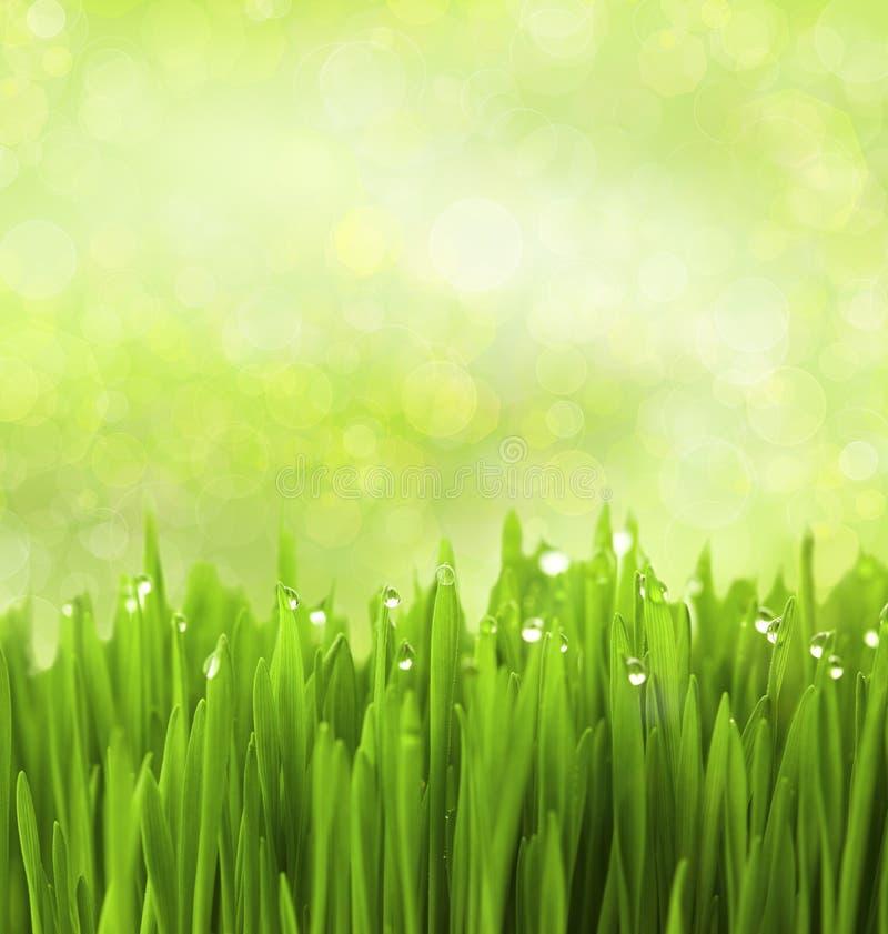 A grama verde com água deixa cair/fundo abstrata fotografia de stock