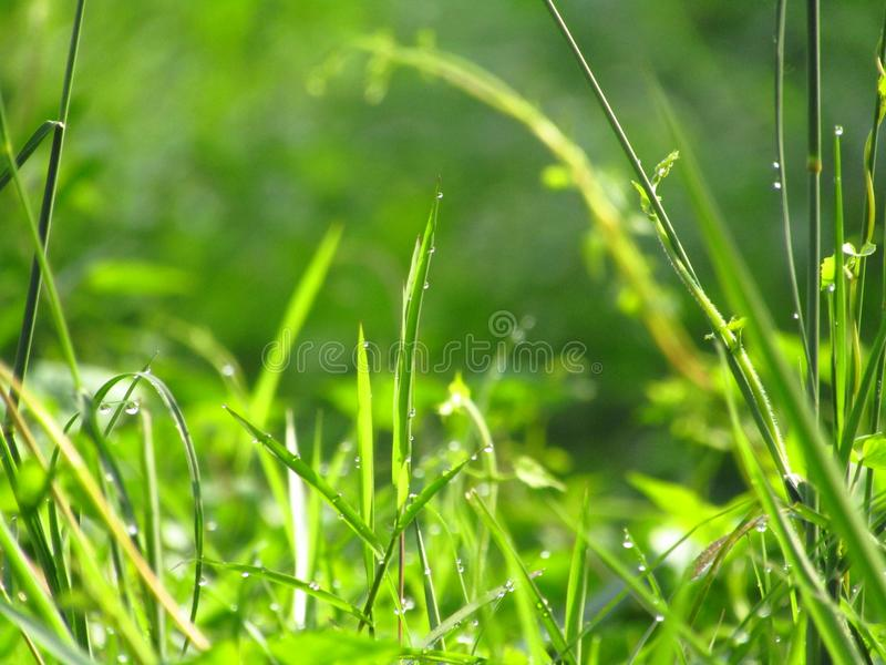 A grama verde com completamente do orvalho na manhã contra no fundo verde borrado foto de stock royalty free