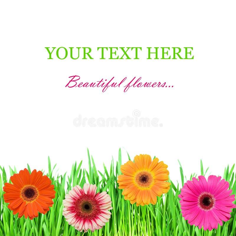 Grama verde com cores cor-de-rosa imagens de stock royalty free
