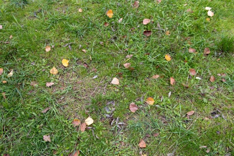 Grama verde com folhas foto de stock royalty free