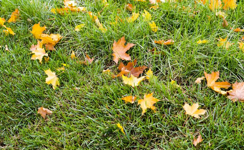 Grama verde com fundo das folhas de outono nave imagem de stock royalty free