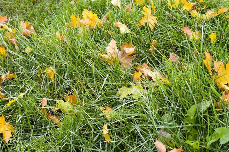 Grama verde com fundo das folhas de outono nave imagem de stock