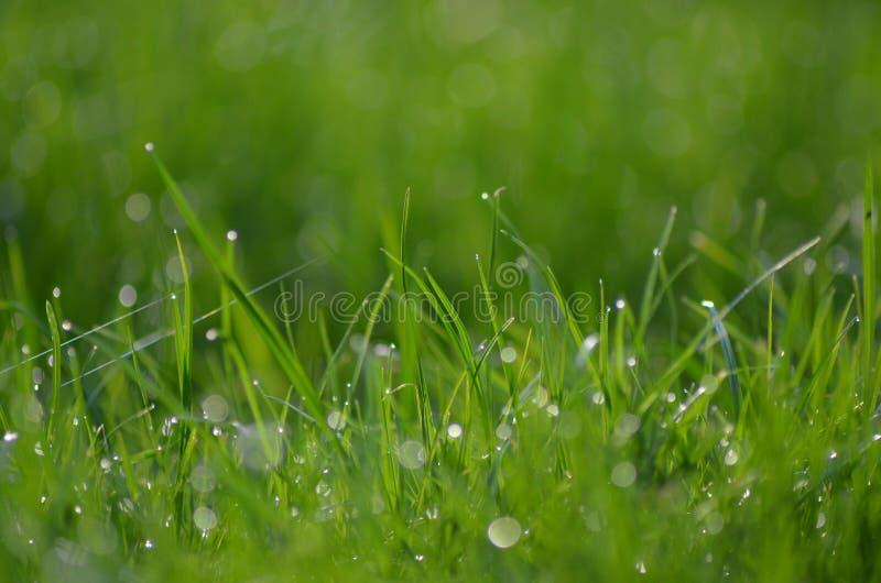 Grama verde com pingos de chuva fotografia de stock