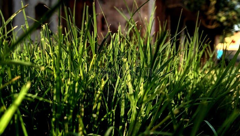 Grama verde da luz solar foto de stock