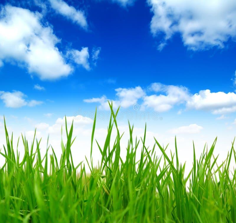 Grama verde da mola fresca sobre o céu azul fotografia de stock royalty free