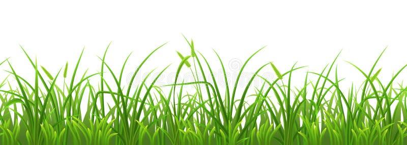 Grama verde da mola sem emenda ilustração royalty free
