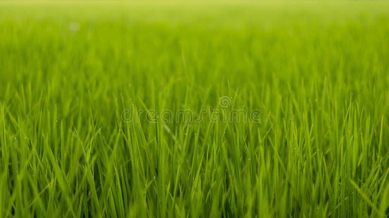 Grama verde de campos de almofada imagem de stock
