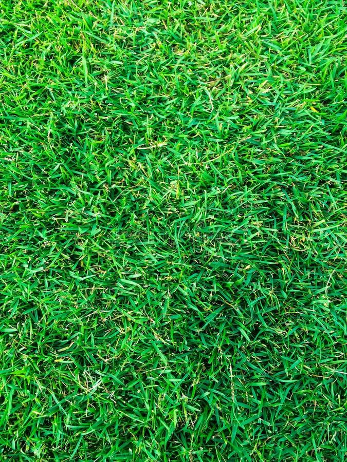 Grama verde de vista superior no passo do futebol ou no campo de futebol foto de stock royalty free
