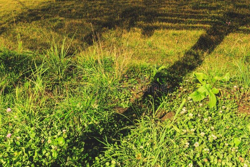 Grama verde do outono com as folhas na noite foto de stock royalty free