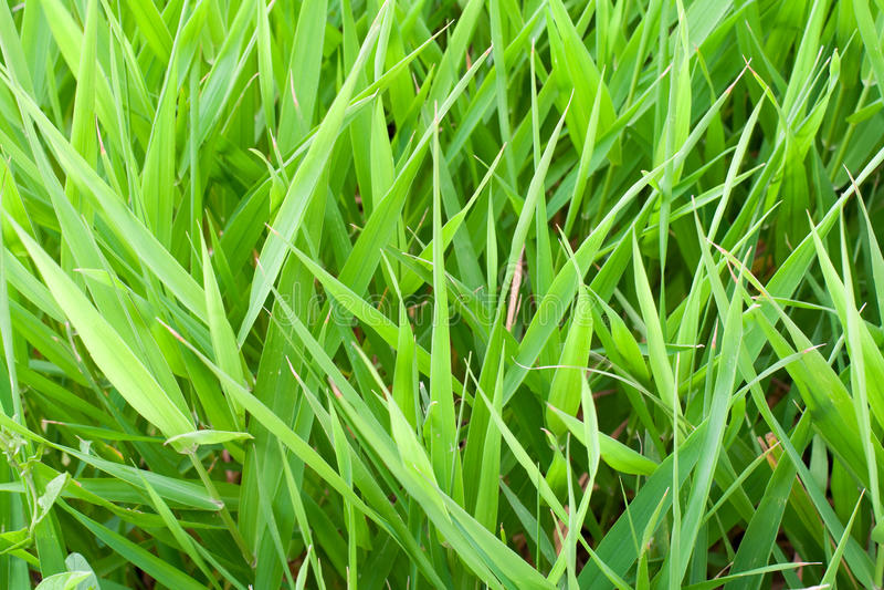 Grama verde do verão imagens de stock