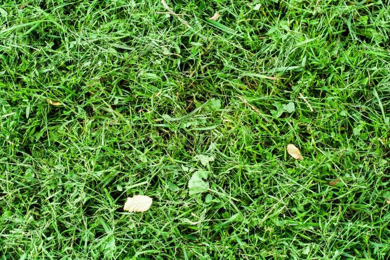 Grama verde do verão imagem de stock
