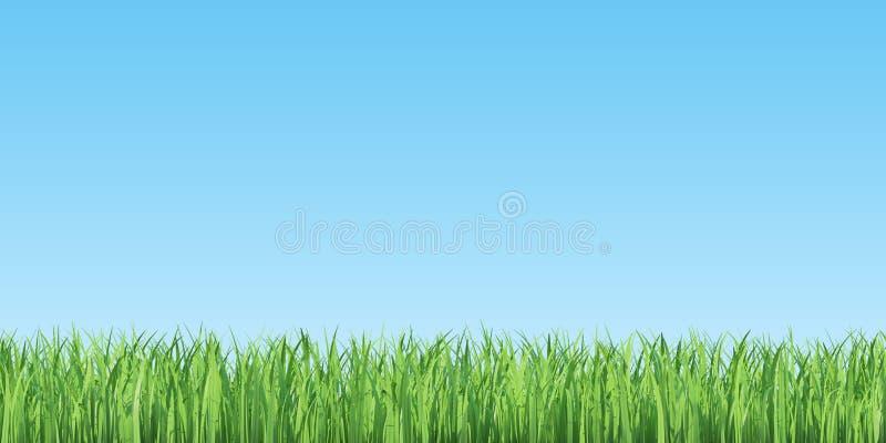 Grama verde do verão e céu azul ilustração do vetor