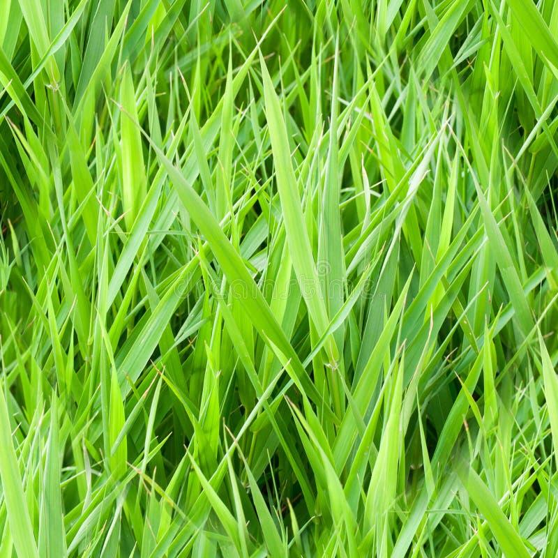 grama verde do verão sem emenda natureza, textura fotos de stock
