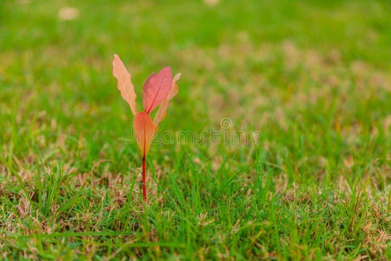 Grama verde e árvores foto de stock royalty free