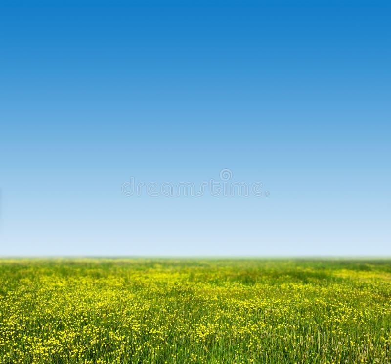 A grama verde e as flores frescas, novas na mola colocam fotografia de stock