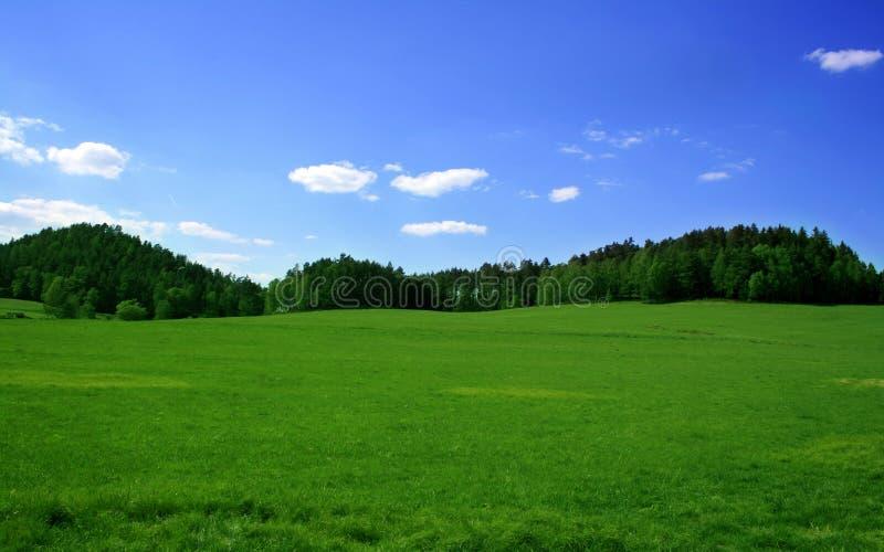Grama verde e céu azul imagem de stock royalty free
