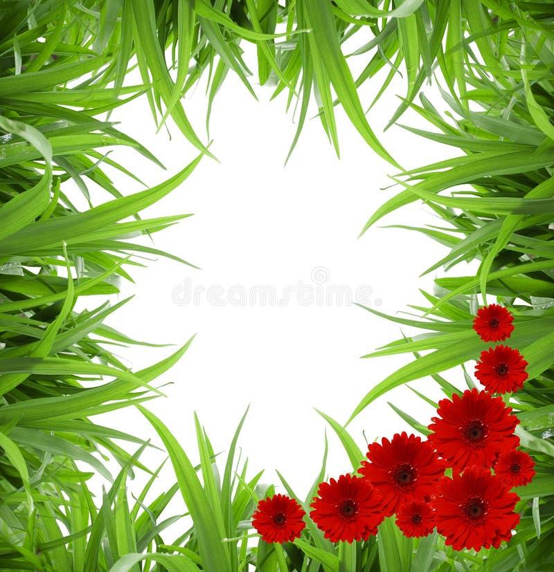 Grama verde e flores isoladas fotografia de stock royalty free